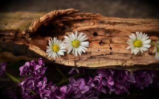 Лес многодетным семьям: порядок оформления и особенности получения льготной древесины